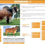 Kathiavar